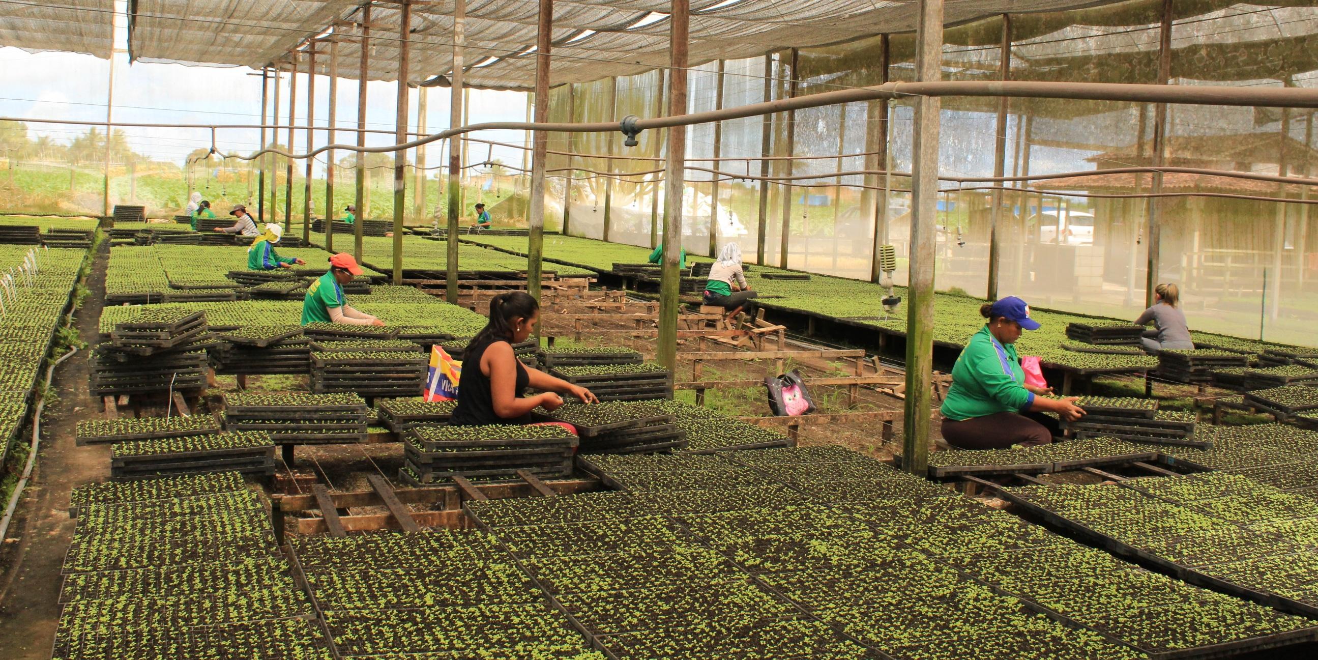 Agricultura familiar ganhou força com a cultura das hortaliças