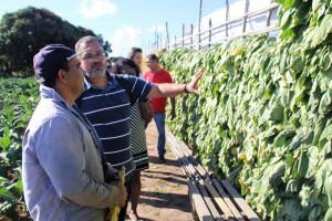 Fiocruz e Secretaria de Saúde visitam fumicultores de Arapiraca